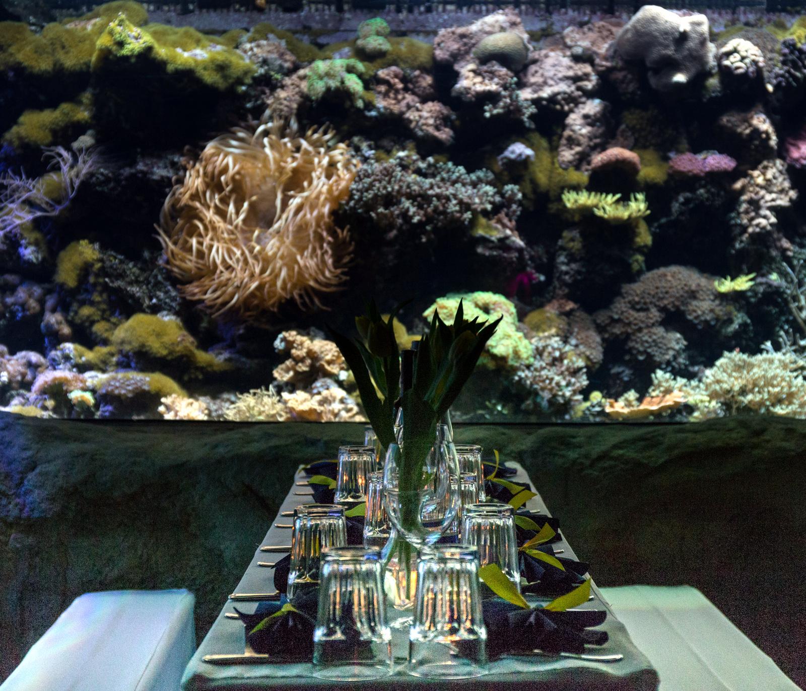 Die Unterwasserwelt von Tierpark Hellabrunn